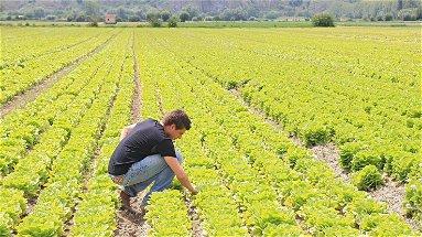 Sempre più giovani imprenditori calabresi in agricoltura: oltre il 6% in più negli ultimi cinque anni