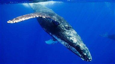 Cetacei nello Jonio: al via le spedizioni scientifiche