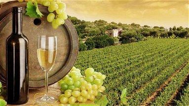 La Camera di Commercio promuove il turismo enogastronomico con l'associazione Terre di Calabria