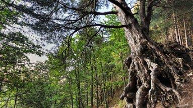 Parco Nazionale Sila: 20 milioni per combattere l'isolamento delle nostre montagne
