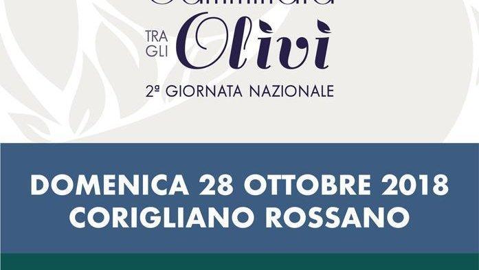 Corigliano Rossano, Camminata tra gli olivi domenica 28