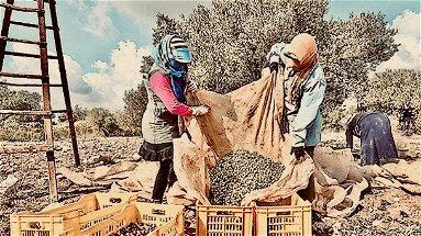 L'olio tunisino che uccide i produttori italiani