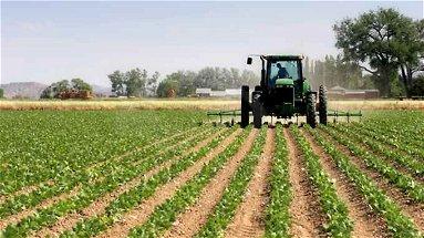 La Calabria ha perso buona parte del suo suolo agricolo