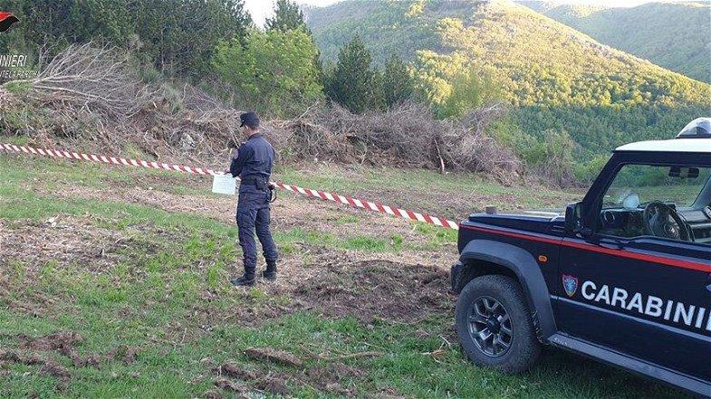 Taglio Abusivo. I Carabinieri di Morano Sequestrano area boscata