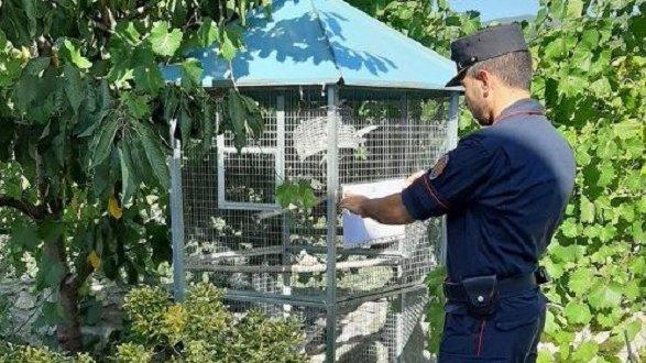 Trovato con uccelli di una specie protetta: denunciato dai Carabinieri