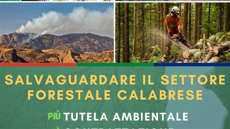 Flai Cgil, Fai Cisl e Uila Uil: «Incontro urgente con la Regione sulla situazione economica del settore forestale»