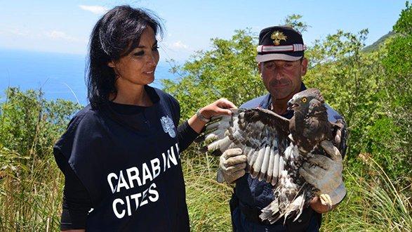 Ecco il calendario 2021 dei carabinieri del Cites dedicato alla specie in via d'estinzione