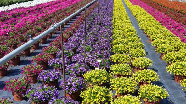Coldiretti Calabria: «Annus horribilis per il florovivaismo calabrese»