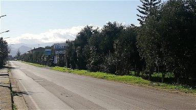 A Crosia interventi per il verde pubblico, piantumati nuovi arbusti lungo il perimetro della ss 531