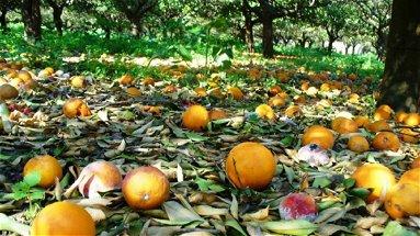 Agricoltura, comuni della fascia ionica chiedono la dichiarazione dello stato di emergenza