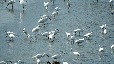 Lago di Tarsia e foce del fiume Crati, habitat per molte specie minacciate di estinzione