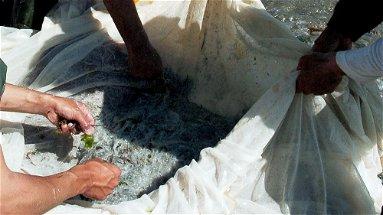 Al via una nuova campagna sperimentale per la pesca della sardella, Gallo: «Grandi aspettative»