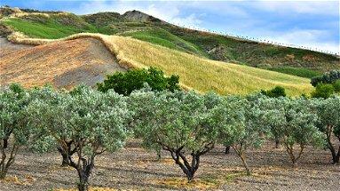 Agricoltura, M5S Europa: «No scippi ai fondi del sud Italia»