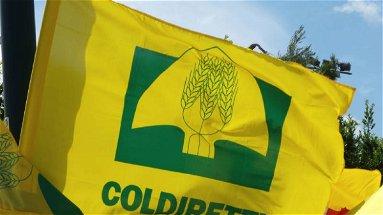 Cumulabilità credito di imposta e Psr, Coldiretti continua la sua battaglia