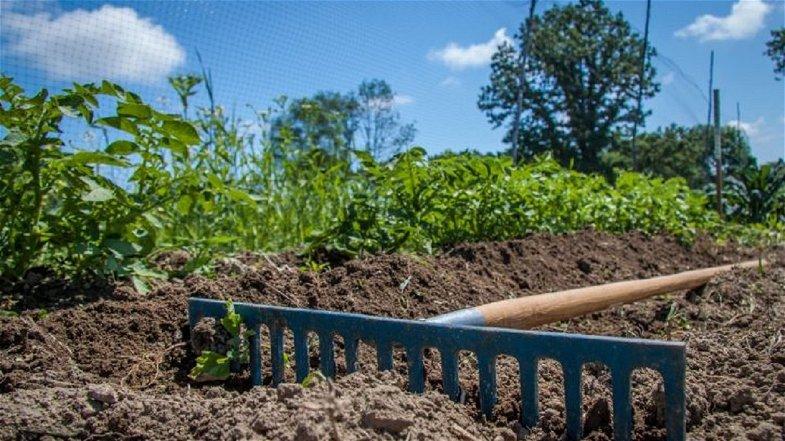 """Cosenza, Slow Food organizza un incontro su """"economia rurale, sociale e circolare"""""""