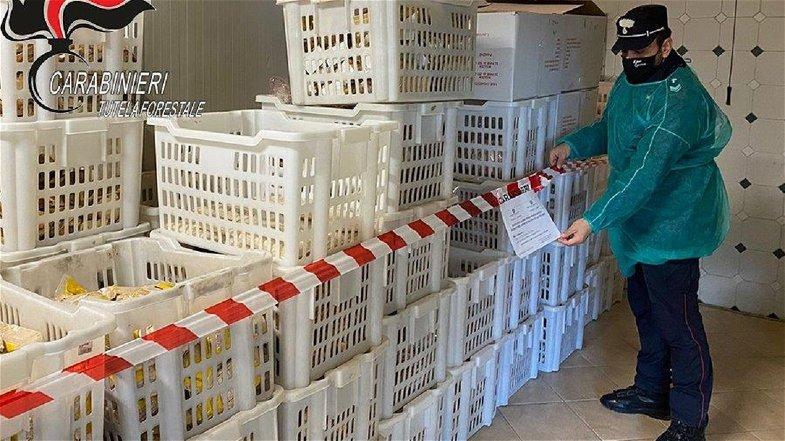 S. Lorenzo del Vallo, sequestrati 13 quintali di prodotti di panificazione e pasta fresca