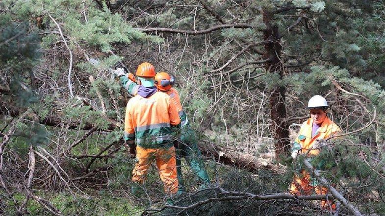 Settore forestale, i Sindacati: «Servono investimenti, sicurezza, responsabilità, contrattazione»