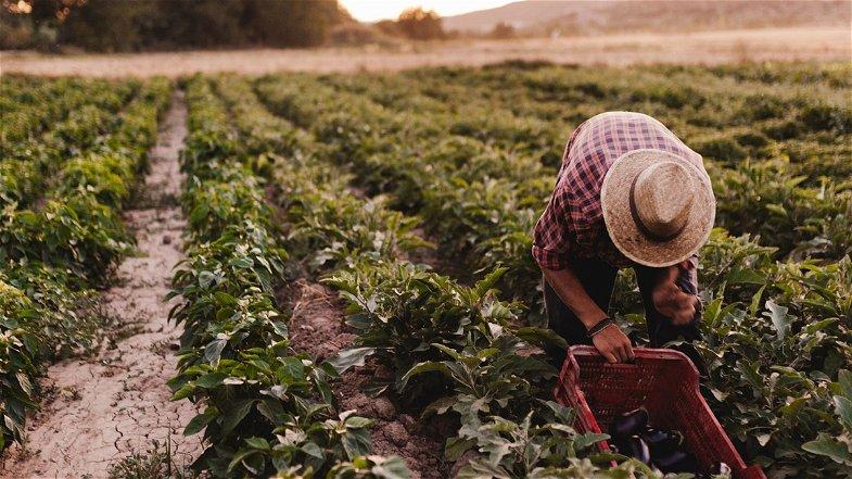 Agricoltura, il Mipaaf promuove a pieni voti la Regione per le misure messe in campo