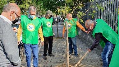 """Castrovillari, l'associazione """"Solidarietà e Partecipazione"""" in prima linea per la tutela e del verde pubblico"""