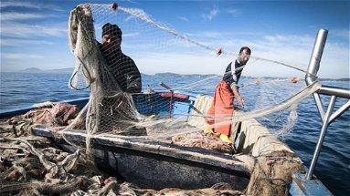 Covid, Parentela (M5s) chiede l'estensione dei sostegni ai lavoratori della pesca