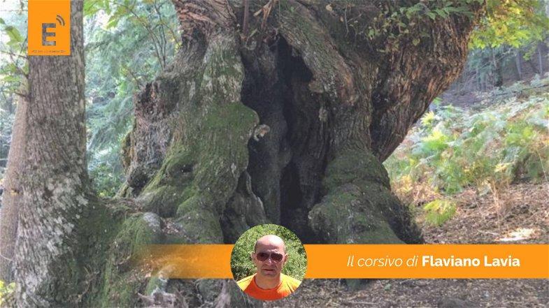 Giornata internazionale della biodiversità nella montagna sacra di Corigliano-Rossano