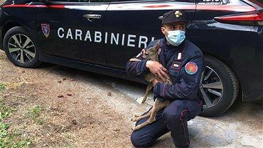 I carabinieri forestali salvano un cucciolo di capriolo. Una storia a lieto fine - VIDEO