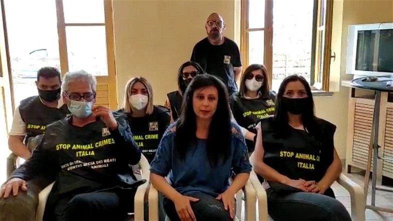 Randagismo, il Movimento nazionale stop animal crimes chiede prevenzione