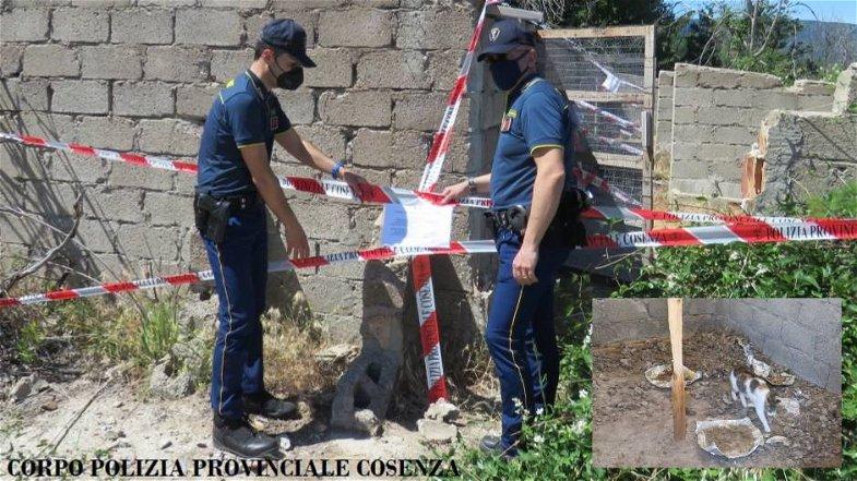 Gatti malnutriti e seviziati: scoperto (e sequestrato) un rifugio in Sila