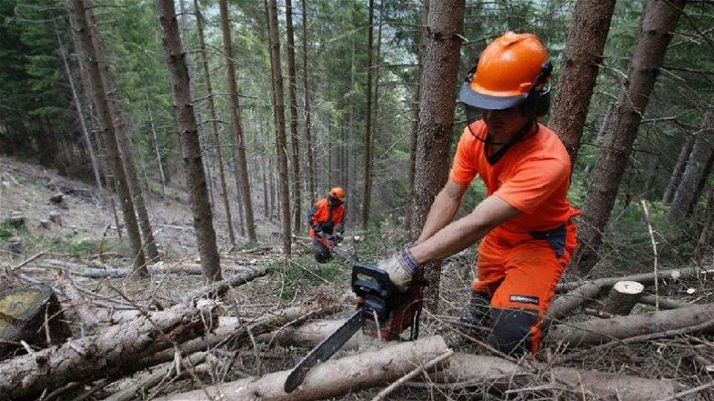 Il 22 giugno si terrà una mobilitazione regionale a sostegno del comparto forestale