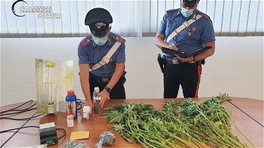 Rende, droga sequestrata e diverse denunce nel fine settimana