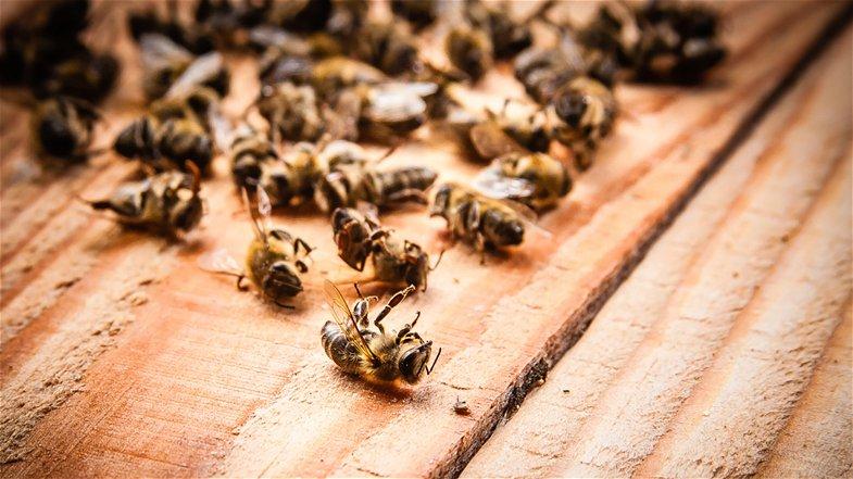 «Bisogna salvare le api»: in Calabria deliberato lo stato di calamità naturale
