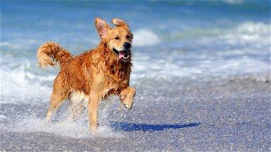 Un'estate al mare anche per i nostri amici a 4 zampe!