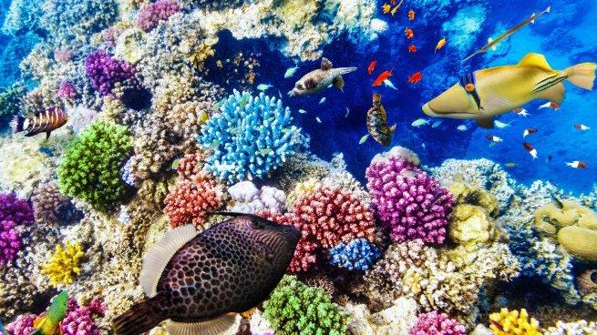 Al via il progetto Unical dedicato alla pesca sostenibile e alla biodiversità marina