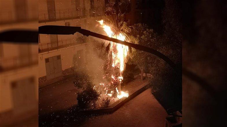 Cassano, pericoloso atto vandalico a Lauropoli: incendiate delle palme