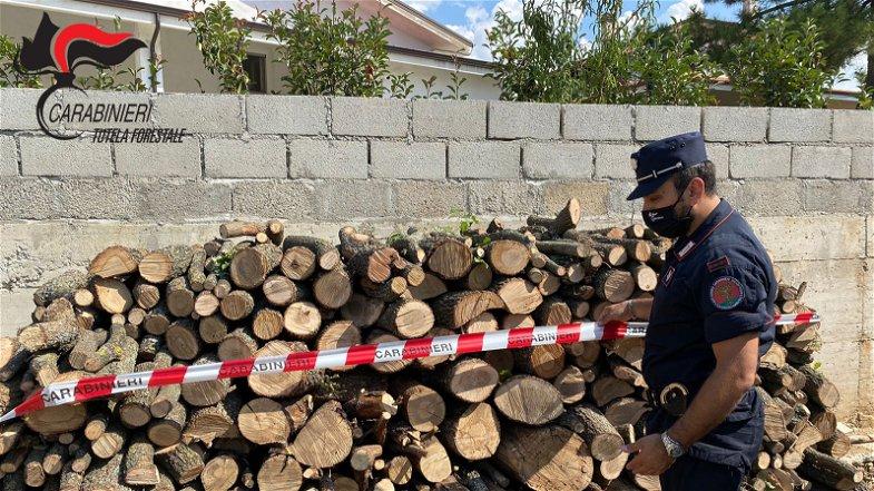 Sequestrati 50 quintali di legname di quercia. Quattro le denunce per appropriazione indebita