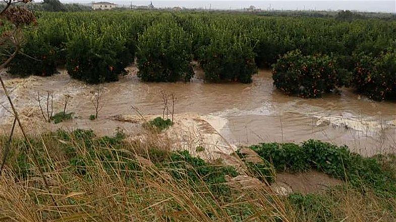 Cassano Jonio, agrumeti nel Crati: il comune dispone l'immediato sgombero dell'area