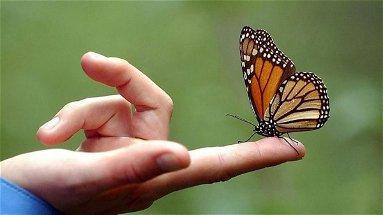 A Tarsia il primo evento nazionale per tutelare e valorizzare le farfalle
