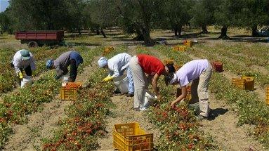 Contrasto al caporalato, Cisl: «Attivare le Sezioni territoriali della Rete del lavoro agricolo di qualità»