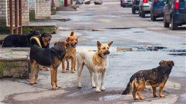 Il movimento nazionale di Stop Animal Crimes propone un piano per salvare gli amici a quattro zampe dalla strada